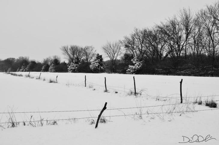 Snowy Field in B&W